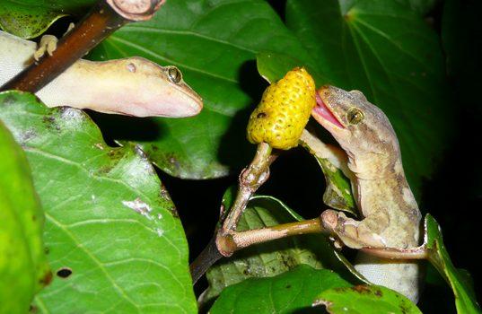 Lizards, berries & seed dispersal